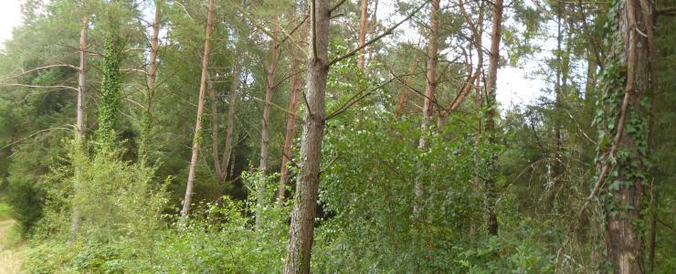 Propriété forestière au nord de la Dordogne