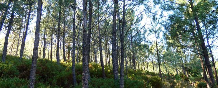 Propriedade florestal no Parque Natural da Serra da Estrela