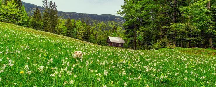 73 Savoie - Des forêts de production et de protection