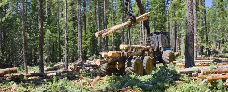 Les Coopératives Forestières