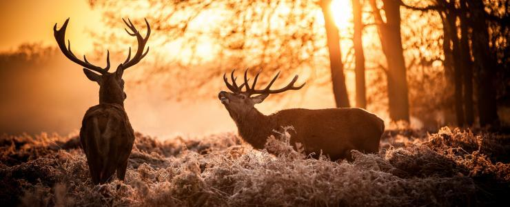 Centre Val de Loire - Production de chêne et parcs de chasse très convoités