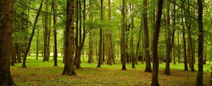 Taxe Foncière sur les terrains boisés