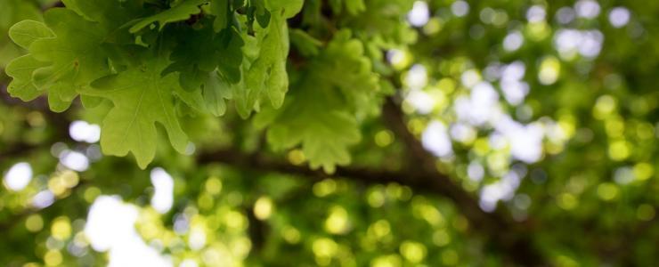 32 Gers - De nombreuses possibilités de développement et d'exploitation des forêts