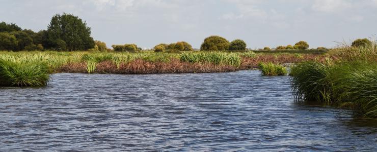 44 Loire Atlantique - Des forêts essentiellement composées de chêne