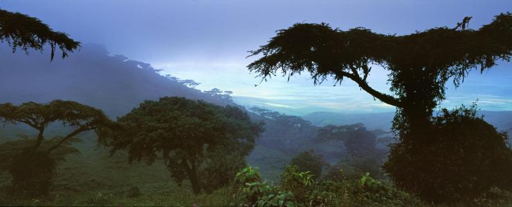 """REDD+ : Les bases ambigües du """"paiement aux résultats"""" obtenu par le Gabon"""