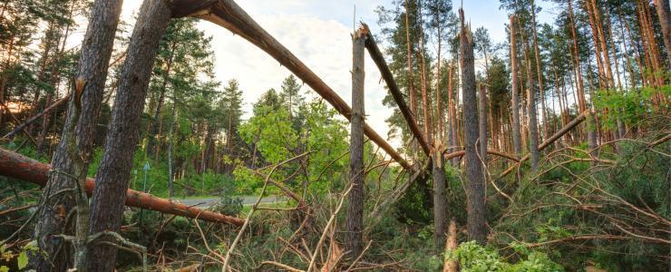 2017 : Une année de sinistres en forêt