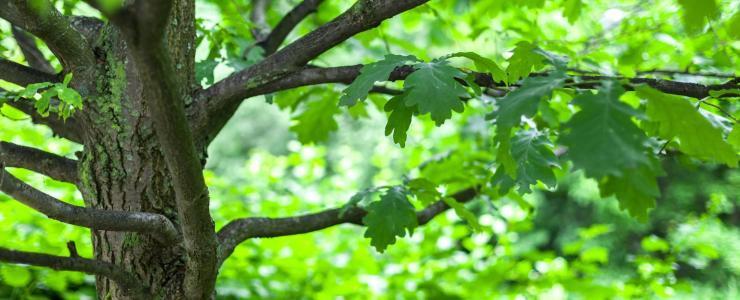 10 Aube - Des forêts accessibles et qualitatives