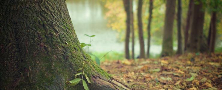 Valoriser sa propriété forestière lors d'une Succession