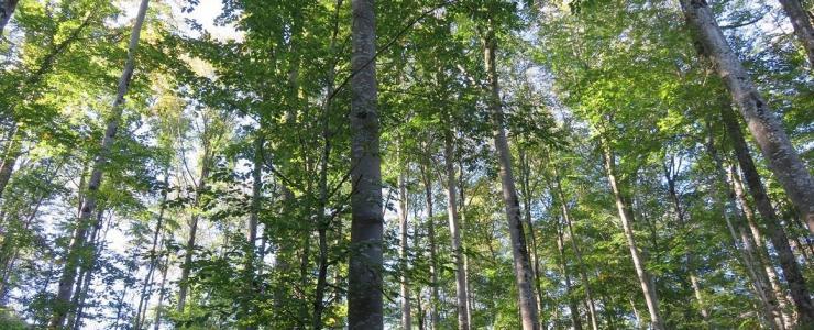 Pourquoi acheter une forêt ?