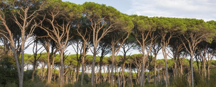 40 Landes - Le département le plus boisé de France