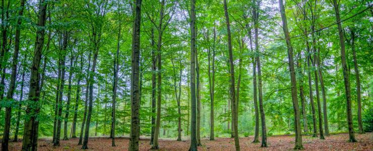 31 Haute Garonne - Les feuillus dominent