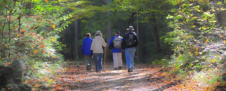 Pays de la Loire - Une forte demande mais les forêts à la vente sont rares