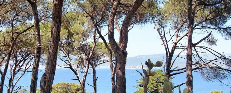La Corse : une région forestière à part entière