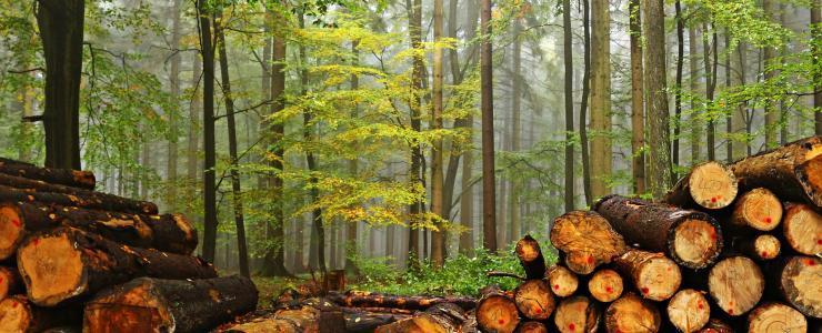 Comment préparer la coupe du bois en Forêt ?