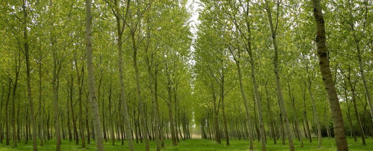 86 Vienne - Des forêts productives et diversifiées