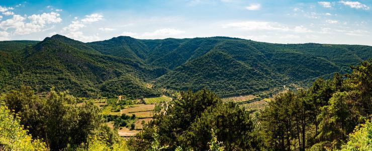 Histoire de la forêt Française