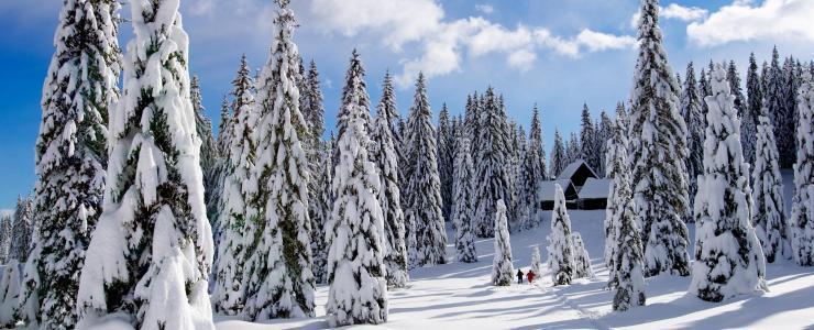 Acheter une forêt au Québec : Ma cabane au Canada