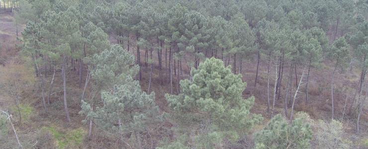 Domaine forestier en Gironde