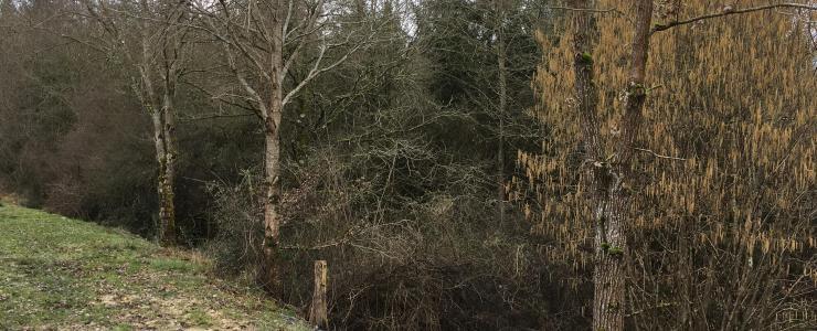 Propriété Forestière au coeur de l'Allier