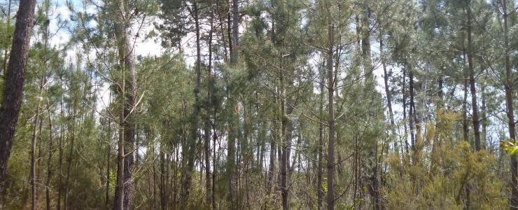 Parcelles forestières en Dordogne