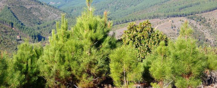 Propriedade florestal na Covilhã, em Portugal