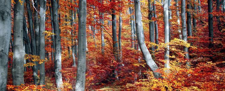 Les saisons en forêt