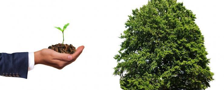 Groupements Forestiers d'Investissement ou Groupements Fonciers Forestiers?
