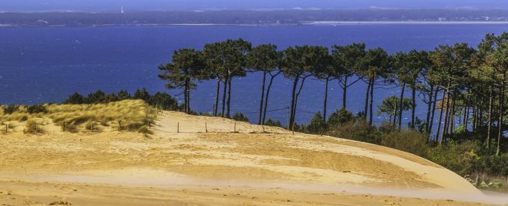 Nouvelle Aquitaine - Des forêts denses et en constante progression