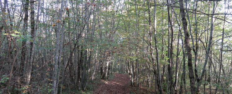 Propriété forestière en Ariège (09)
