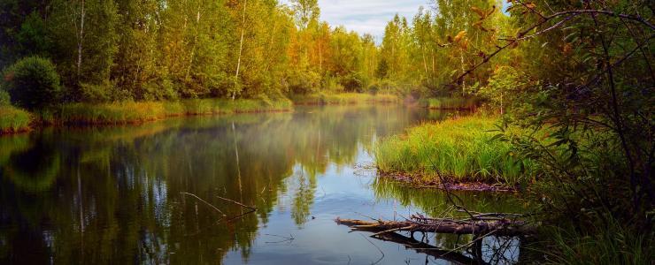 36 Indre -Production de bois d'oeuvre de qualité et territoire de chasse