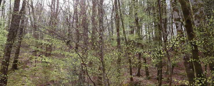 Forêt de bois de chauffage en Corrèze 19