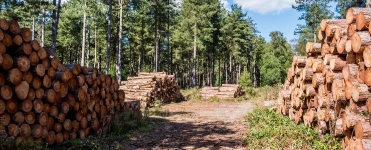 Vente de Bois en Forêt Privée