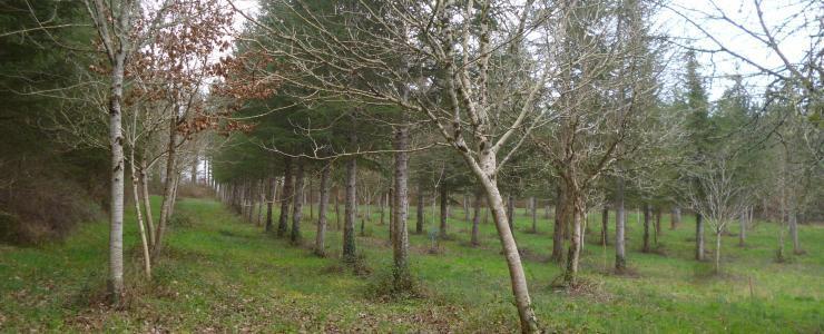 Ensemble forestier et cynégétique en Dordogne