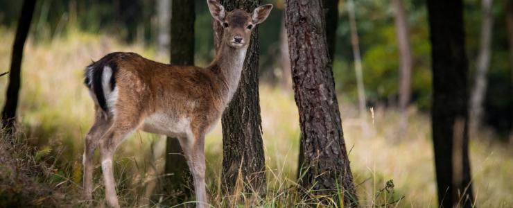 03 Allier - Des forêts parmi les plus belles de France