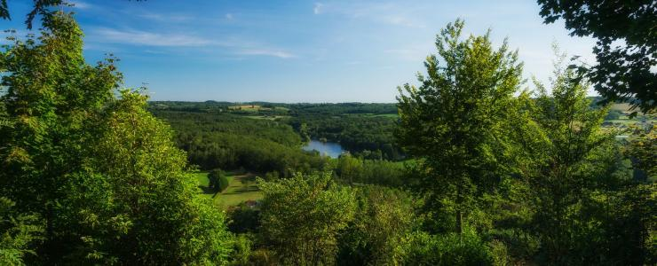 Ventes atypiques : Viagers forestiers et GF