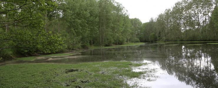 Forest and leisure property near Thiers