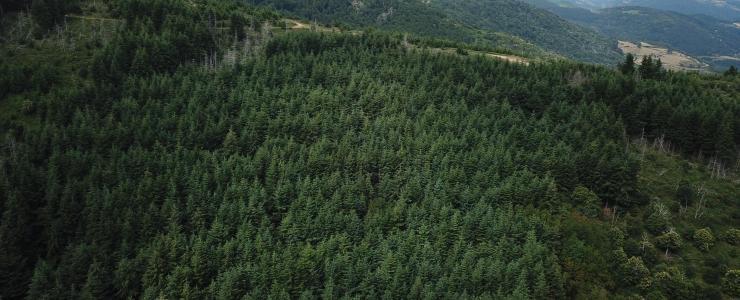 Forêt de production dans les Monts d'Ardèche