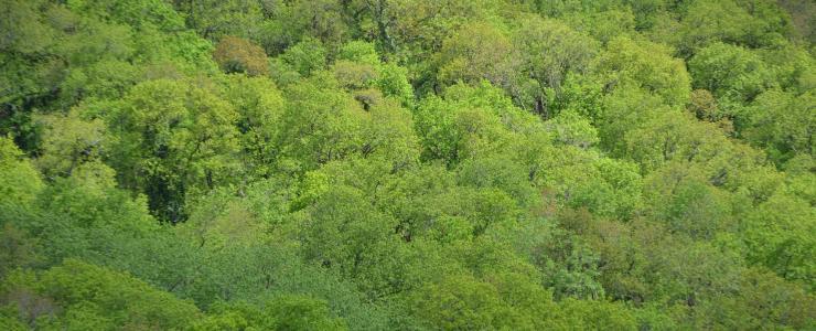 Total et les forêts