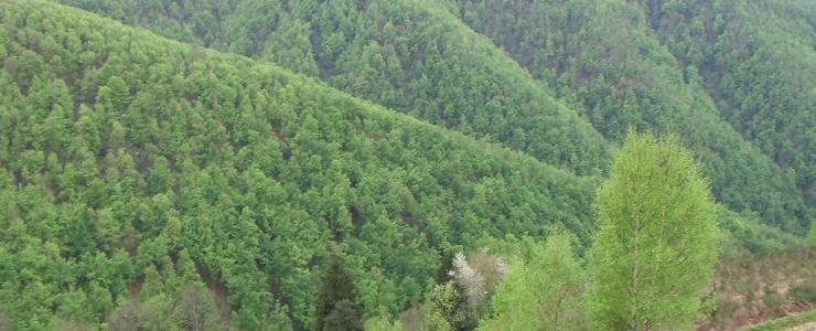 Massif Forestier à proximité de Toulouse