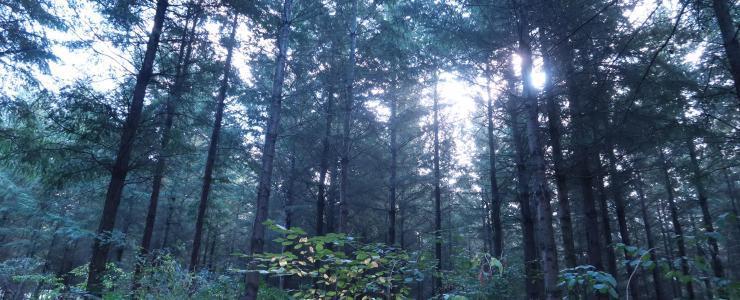 Forêt de douglas