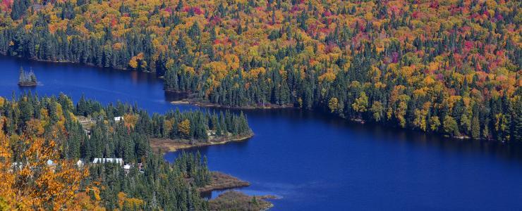 La terre à bois québécoise, un couvert caractérisé par sa diversité