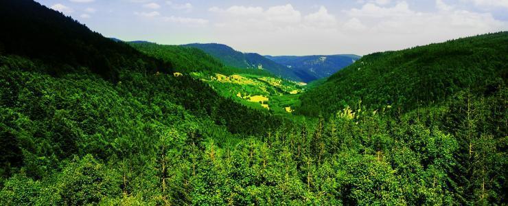 Grand Est - Des forêts caractérisées par la variété et la qualité de leurs essences