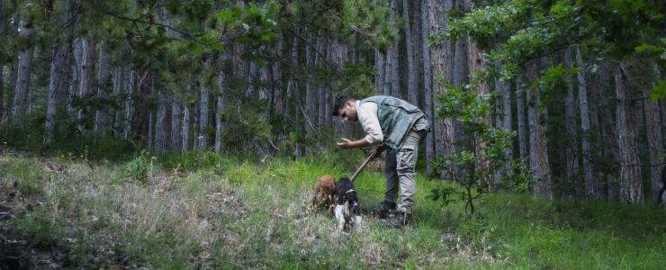Trufficulture et Choix du Terrain