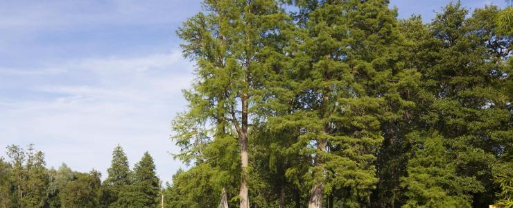 91 Essonne - Un prix de vente des forêts supérieur à la moyenne nationale