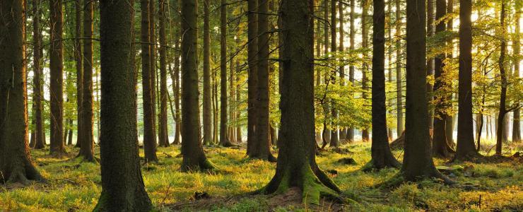 Pourquoi produire des gros bois ?