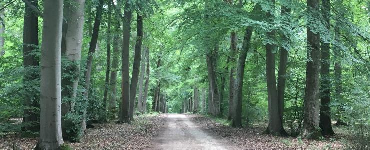 Nouvelle forêt dans l'Eure pour Groupama Immobilier