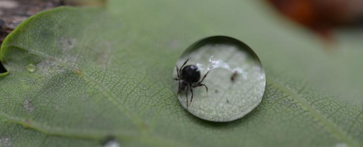 Le Saviez-vous? Spécial maladie de Lyme