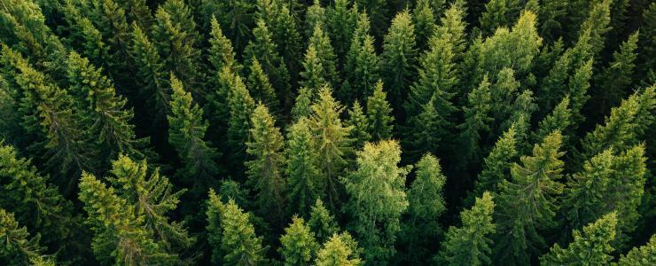 Nouvelle approche de l'expertise forestière