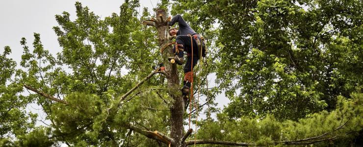 Técnico Florestal