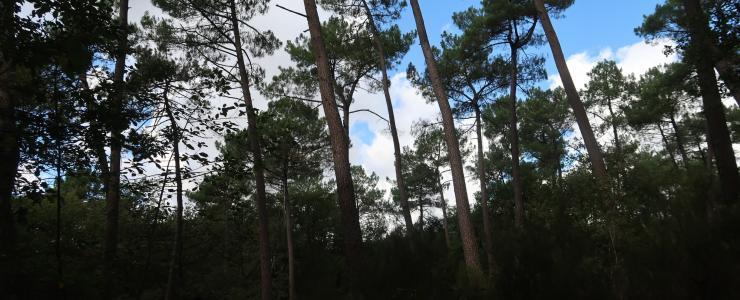 Propriété forestière en Indre et Loire